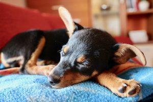 Okrągłe legowiska dla psów