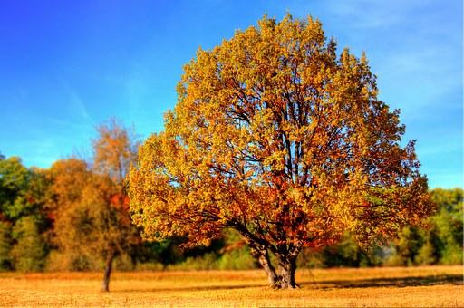 Jak przyciąć drzewa?