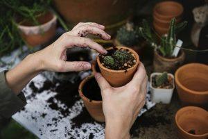Zakładanie ogrodów jest bardzo proste