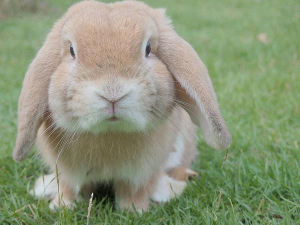 Najważniejsze informacje dotyczące zakupu klatki dla królika