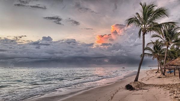 Czy jest możliwość zakupu palmy do ogrodu?