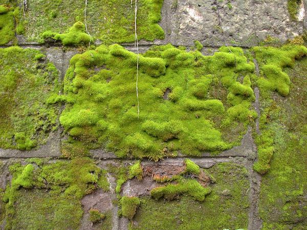 Osuszanie ścian i fundamentów